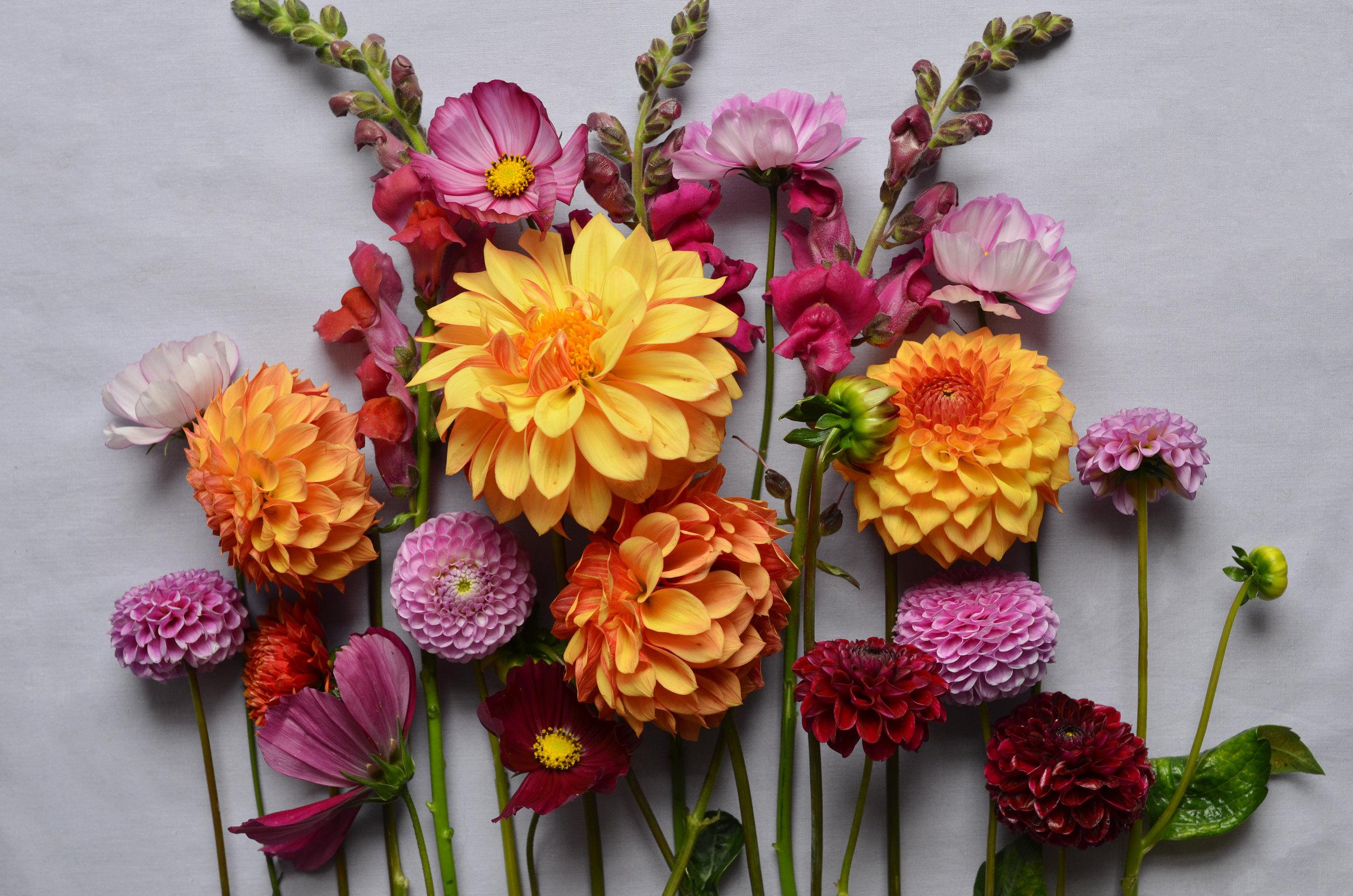 Locally grown Fort Collins flower mix. Dahlias. Zinnas. Cosmos. Snapdragons.