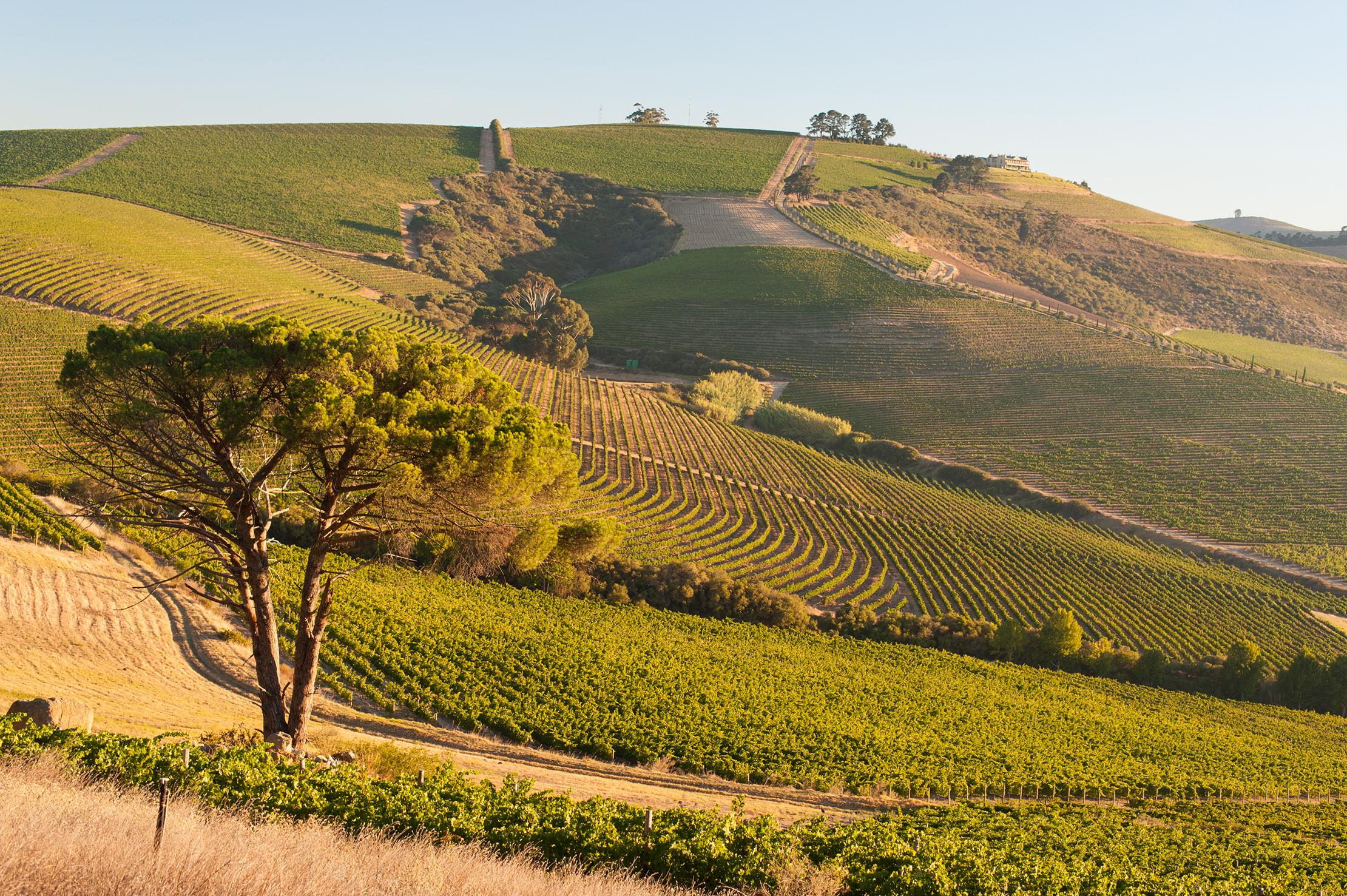jordan-winery-landscape-38.jpg