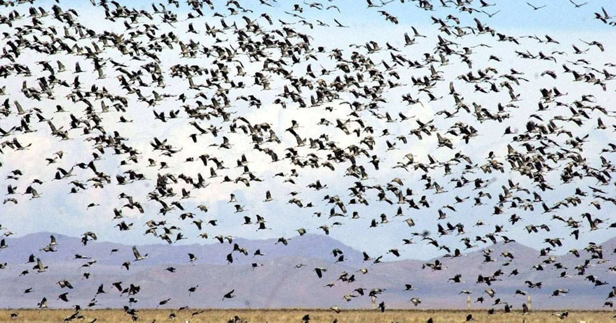 Wings Over Willcox Festival - The mission of the Wings Over Willcox festival is to foster awareness of birds, wildlife and their habitats; to promote conservation and habitat development of the birds and wildlife of Southeastern Arizona; and to develop viable, nature-based tourism in Willcox and the surrounding areas.