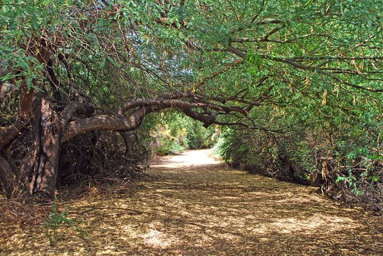 tree-tunnel-on-one-of.jpg