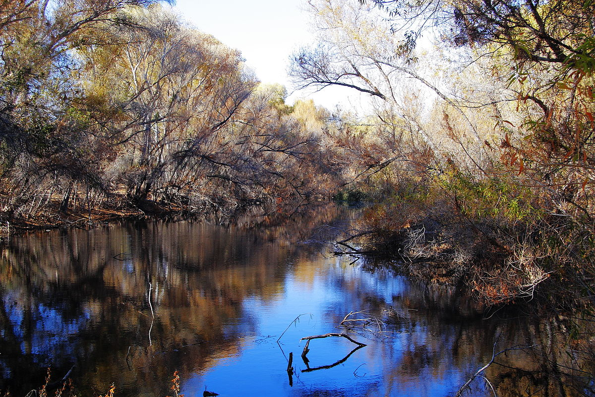 1200px-Palm_Lake_at_Hassayampa_River_Preserve.jpg