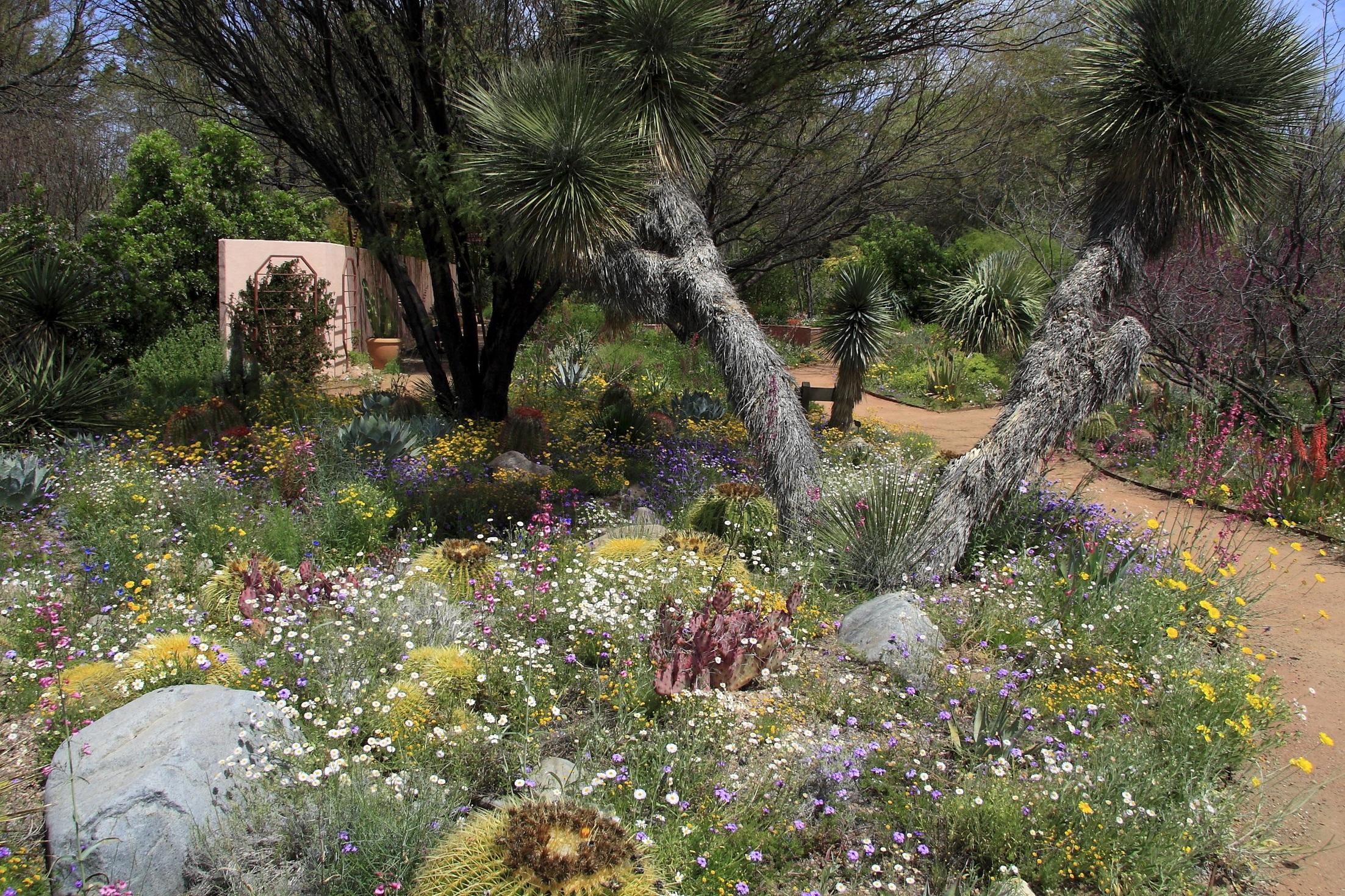 Boyce Thompson Arboretum - 37615 E US Highway #60, Superior, AZ 85173http://www.btarboretum.org/
