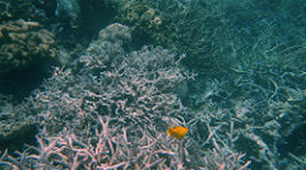 This image captures a perfect example of what coral bleaching is and how its dangerous to all marine life.