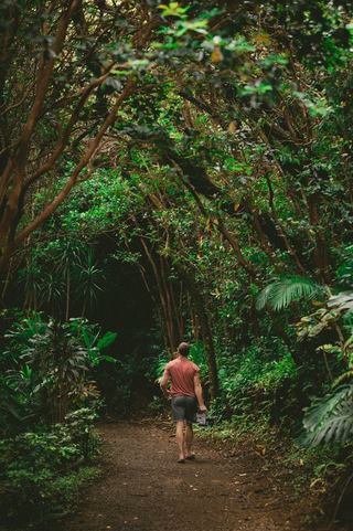 Maui Jungle by Jacob Owens