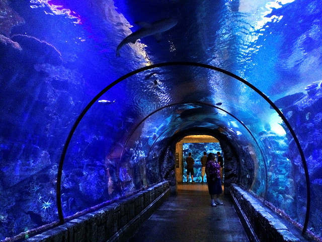 Mandalay Bay Aquarium - Underwater Tunnel by Daniel Ramirez via flickr