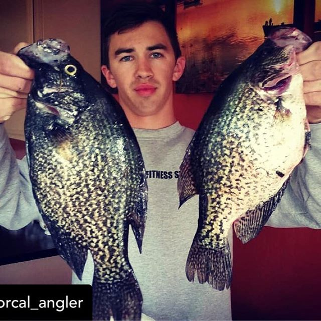 @norcal_angler Day 2: The crappie whisperer strikes again!