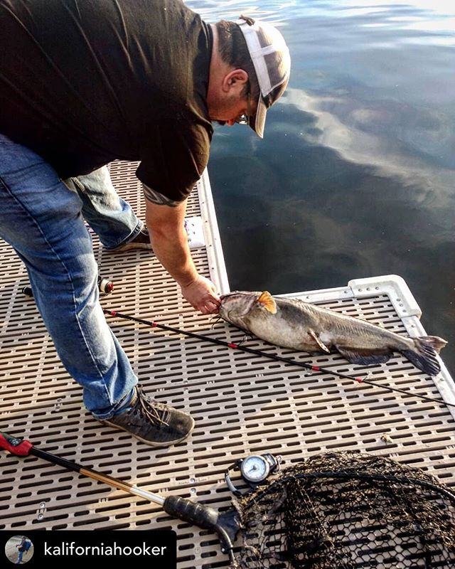 @kaliforniahooker When up at Clearlake I really enjoying getting out and catfishing. And sometimes you catch when you were rigged up for bass. Hungry little guy!  #bass #bassfishing #California #fishingpole #poles #lures #bait #lake #tackle #tacklebox #hook #kaliforniahooker #angler #fisherman #worm #googanbaits #googansquad #favoriterodsusa #lakefishing #catfish #rod #reel #rodandreel #catch #catchandrelease #hookandcook #craw #plastics