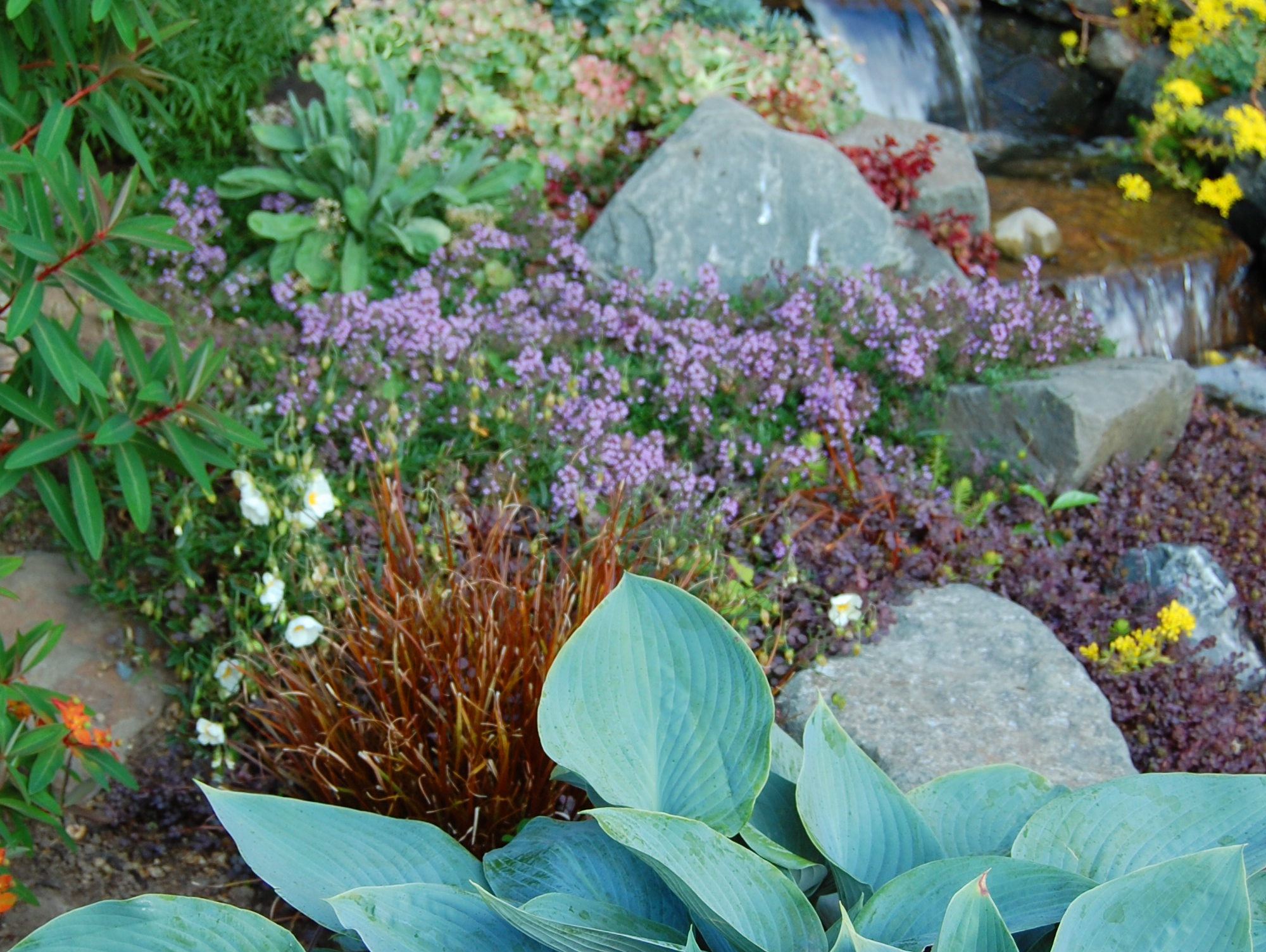 Customize anything. From waterfalls to flowers and easy-to-maintain plants. -
