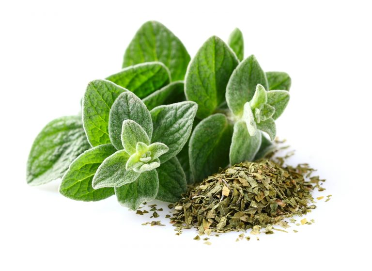 oregano health.jpg