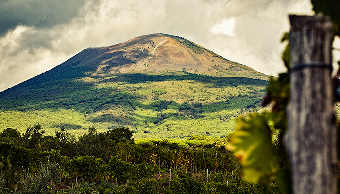 Grapevines-with-mountain-landscape-backdrop.jpg