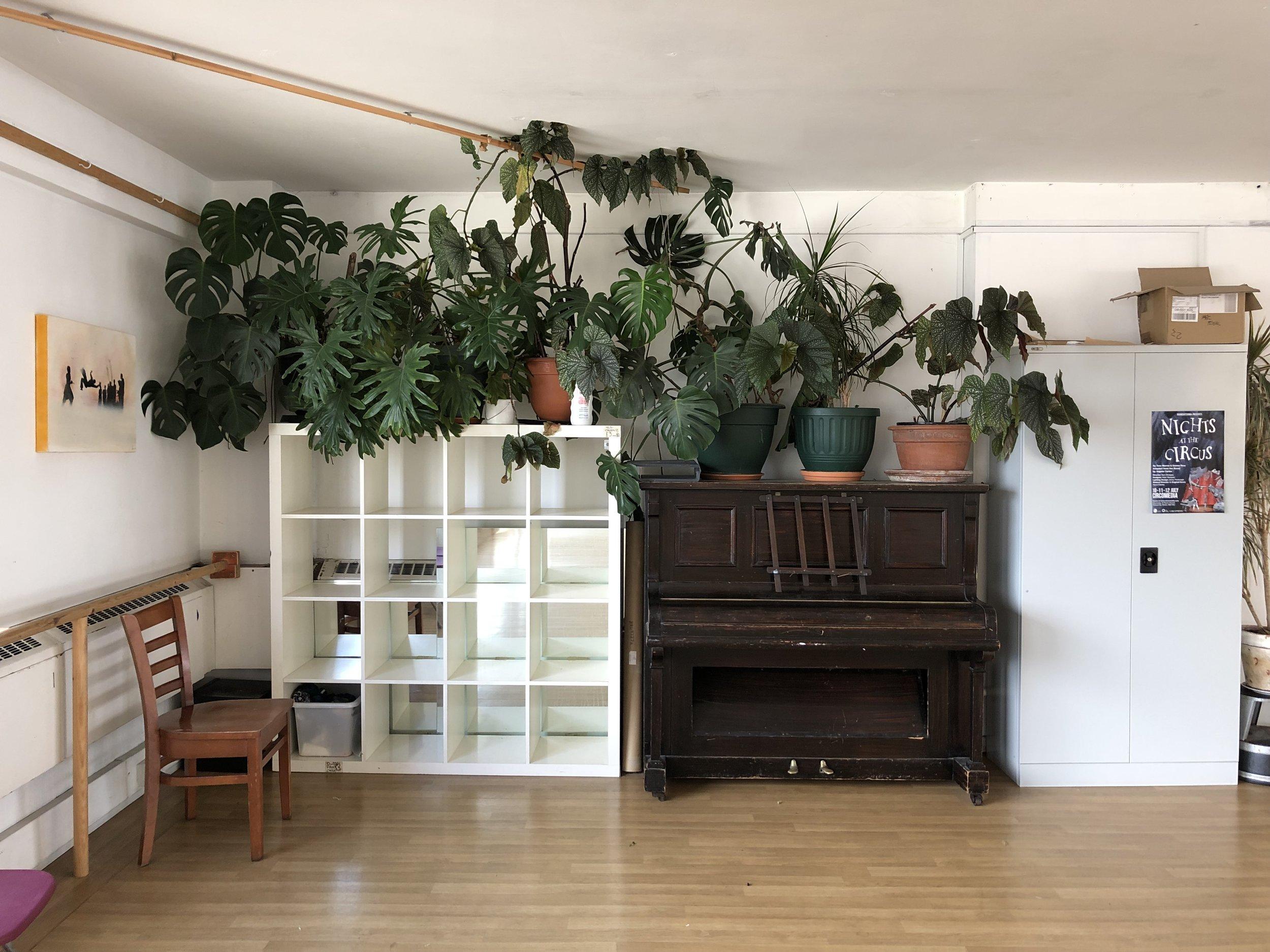 Studio 2 Plants.jpg