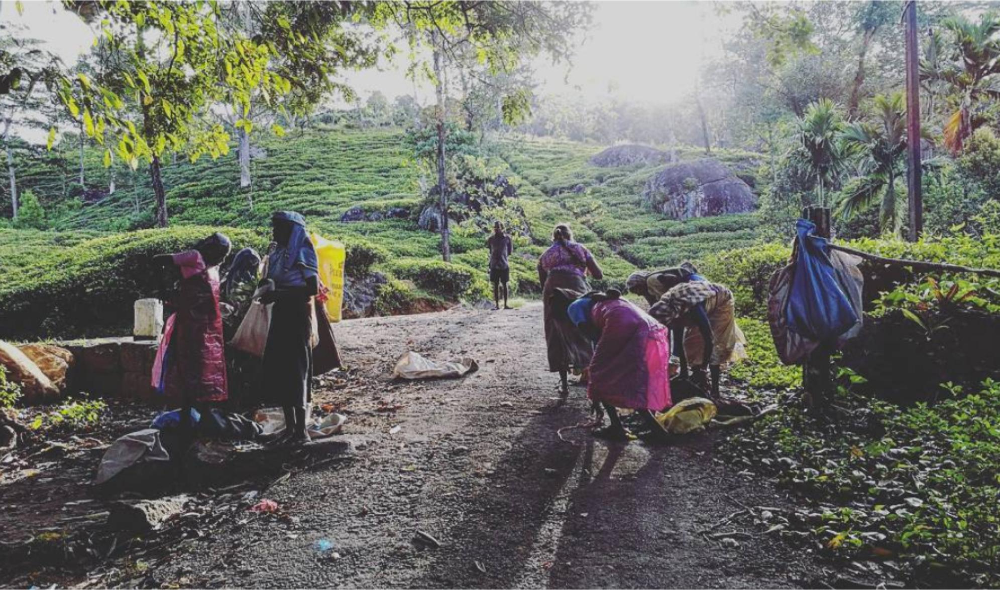 Aravinda pickers.jpg