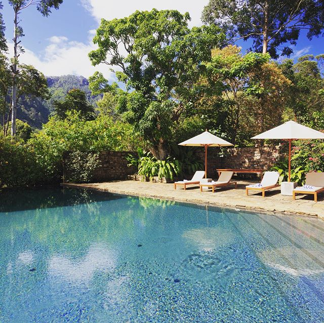 Our little slice of Sri Lankan paradise.. 🌿 ~ Sun lounger ~ Infinity pool ~ mountain view ~ Sunshine ~ What more do you need?