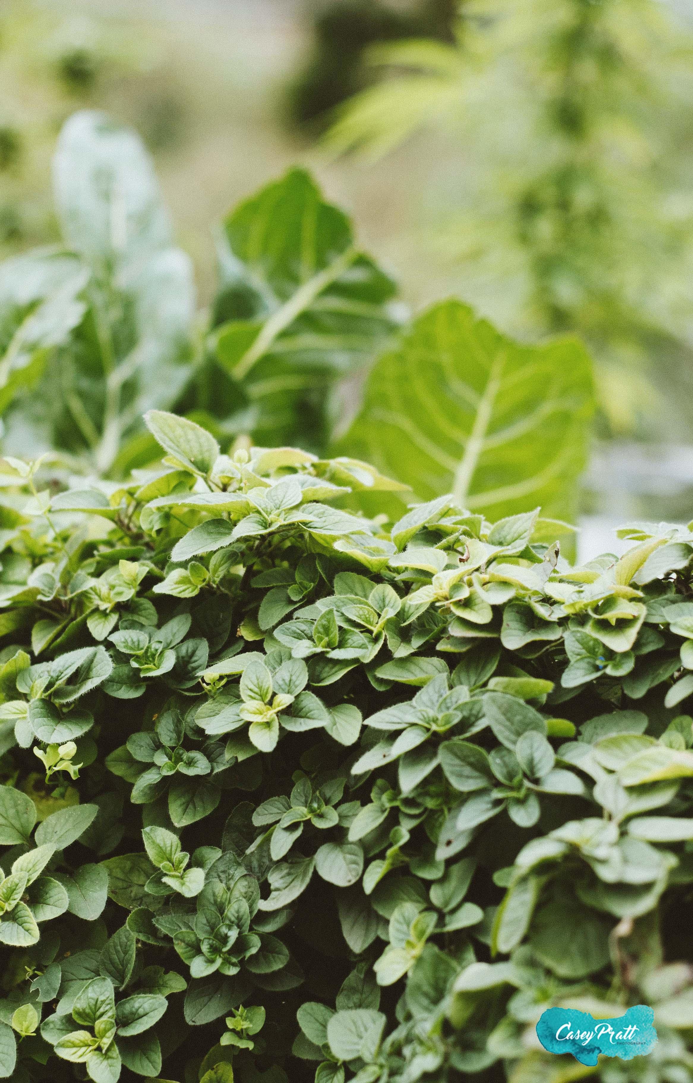plants_credited.jpg