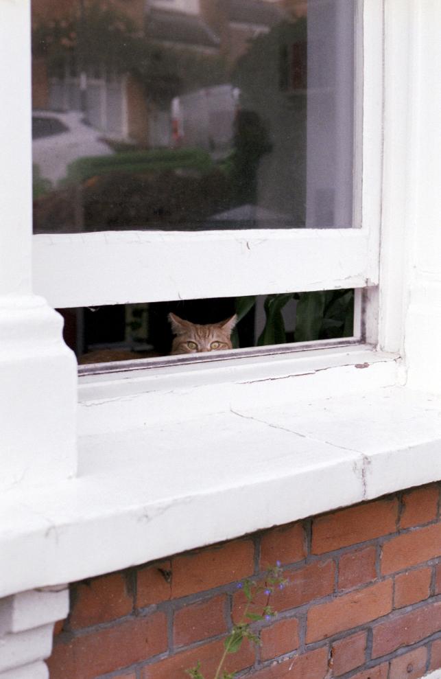 Cat window.jpg