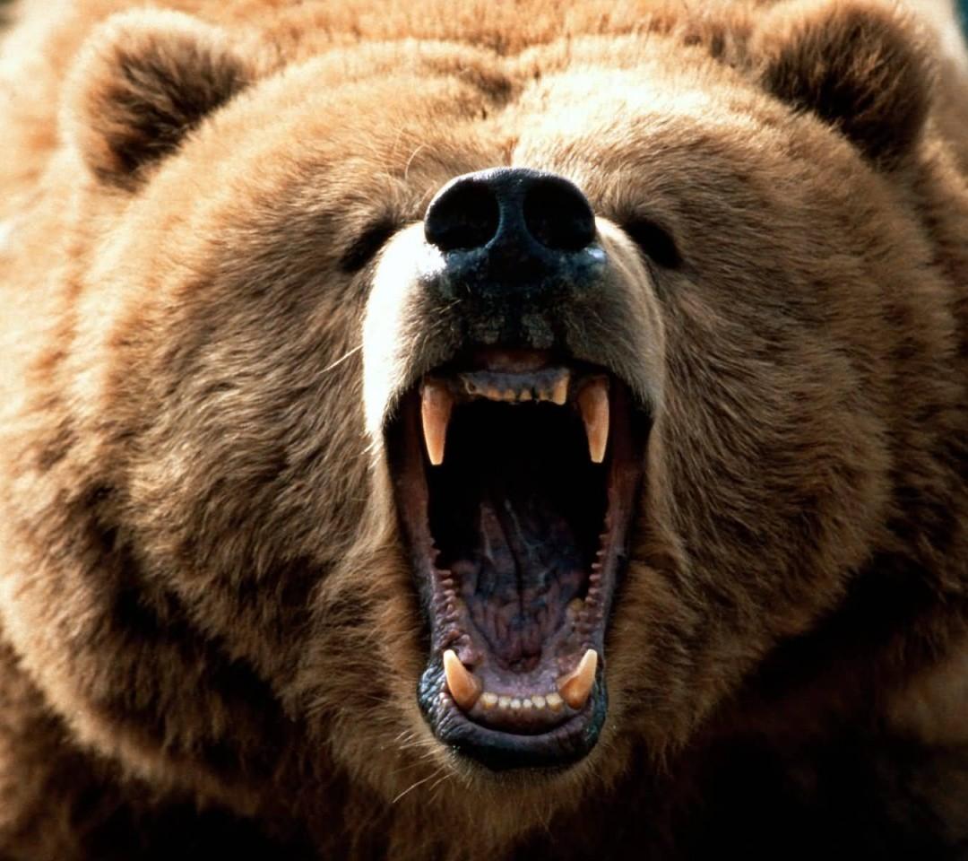 animals-bear-angry-brown-bear-wallpaper-1080x960.jpg
