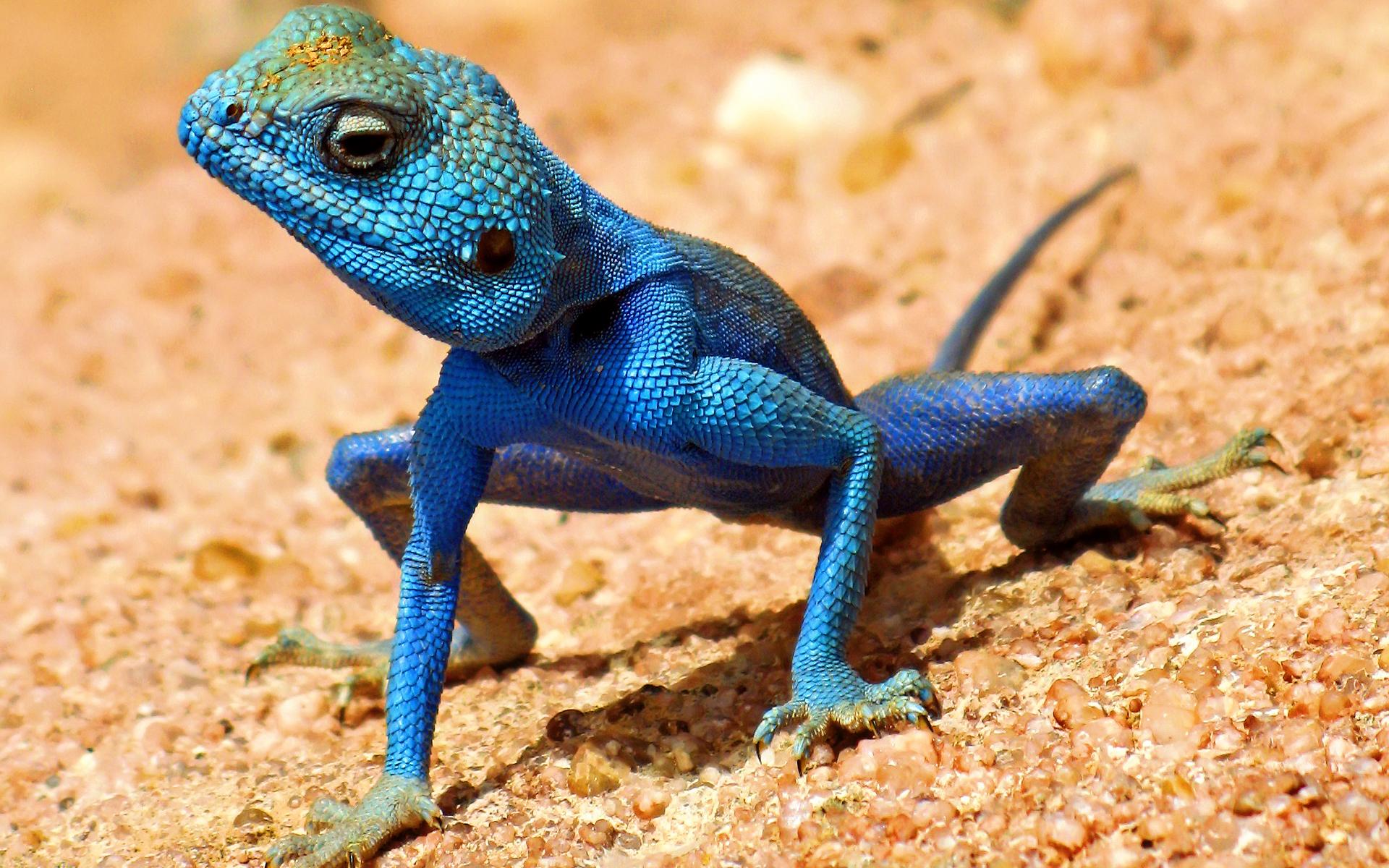 lizard8.jpg