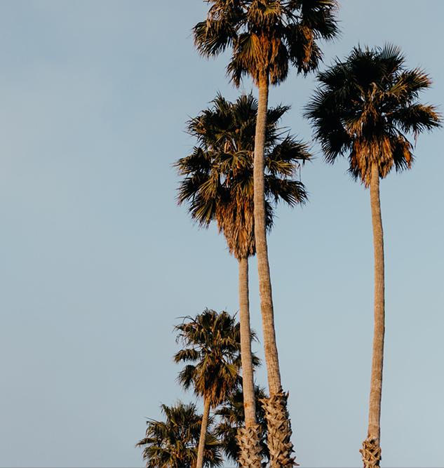 22_palms.jpg