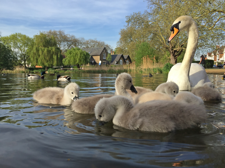 Barnes Pond -