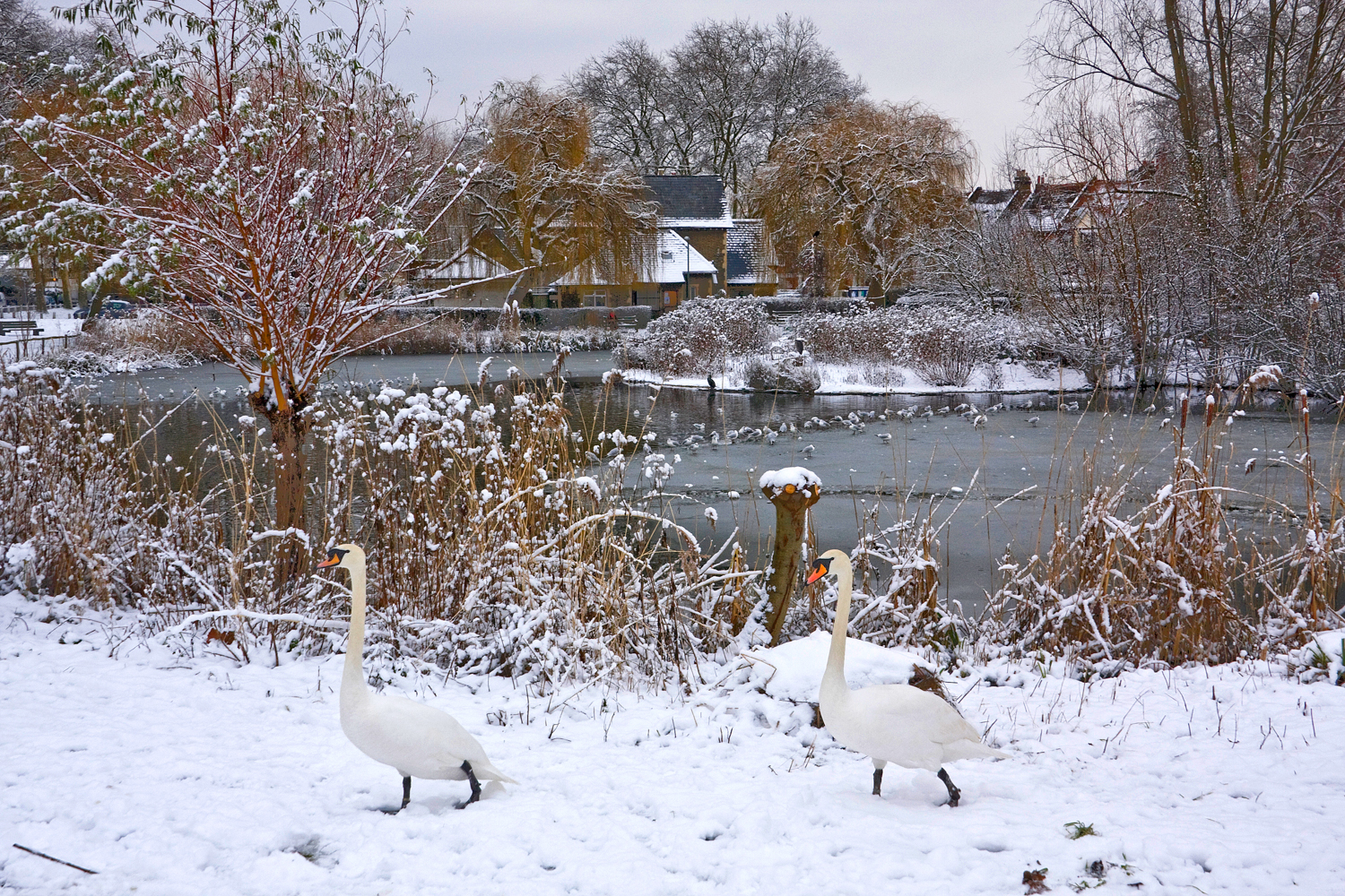 Barnes+Pond+in+the+Snow+5+2.jpg