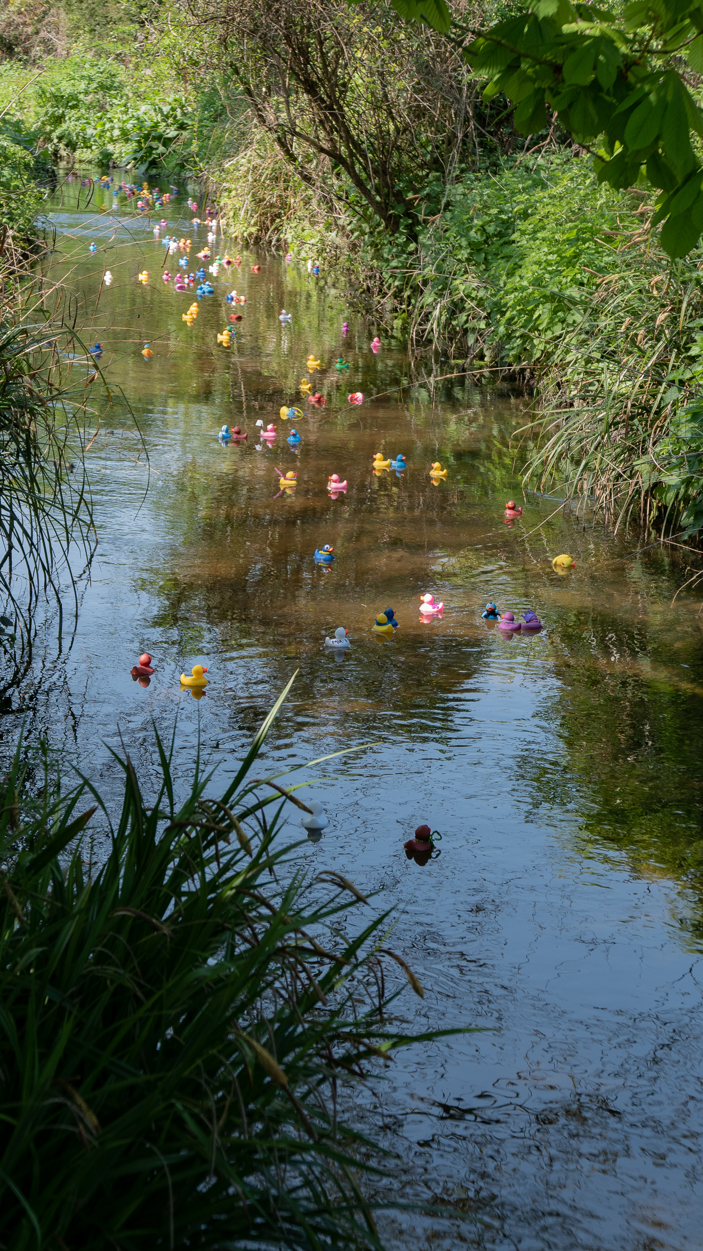 BCA Duck Race 2019 - 8.jpg