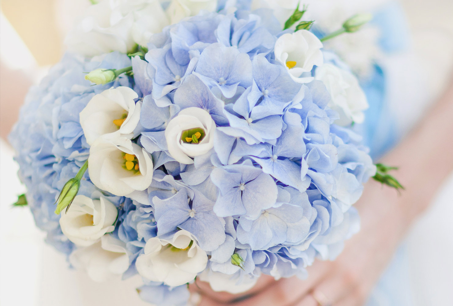 common-wedding-flowers-hydrangea-1.jpg