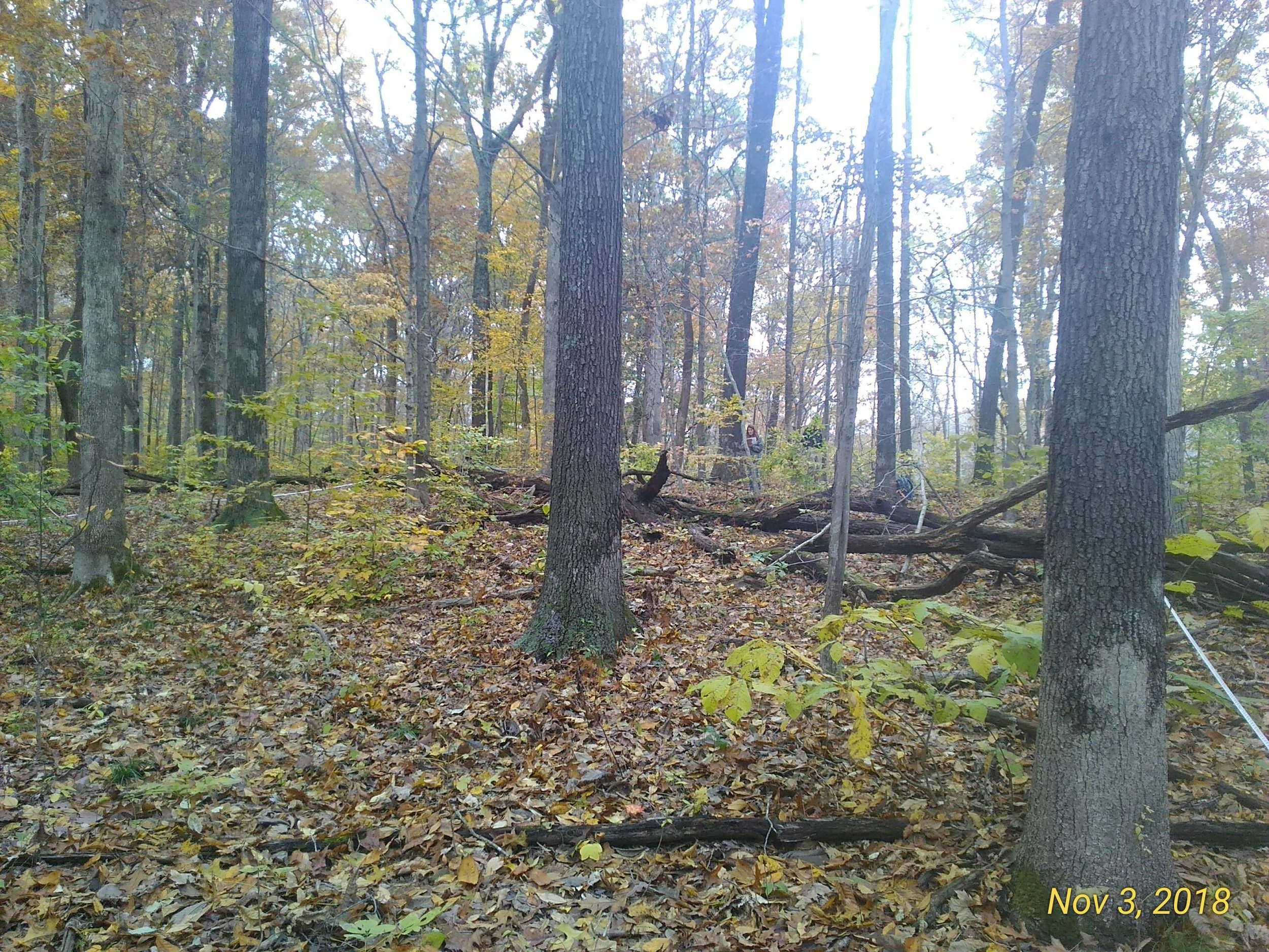 Timber stand improvement area that claims the need to allow more light to reach the forest floor for oak hickory regeneration.