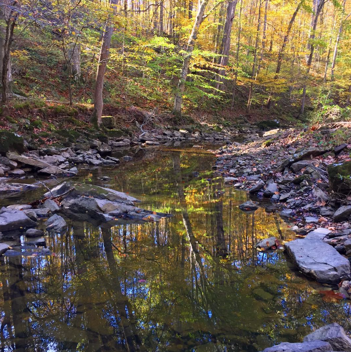 Stream within the project boundary.