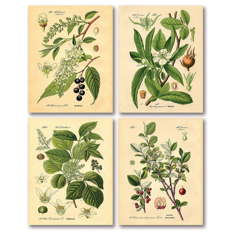Old-Fashioned Botanical Prints - $11.99