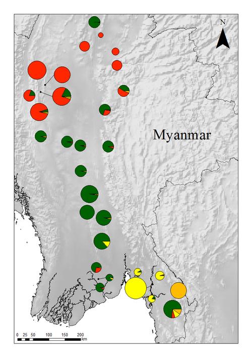 Fig. 1: Distribution of four genetic clusters of teak in Myanmar
