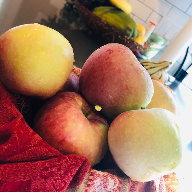 Our first batch of #apples from our Columnar Scarlet Sentinel Apple tree! So #tasty. Crunchy and sweet. We got a dwarf tree last year for the deck so the deer and bear couldn't steal the #fruit. There's an #applepie in our future! 😋😋😋 #garden #organic #growyourfood #gigisorganics #tastethecaribe #latina #chef #fruitpicking
