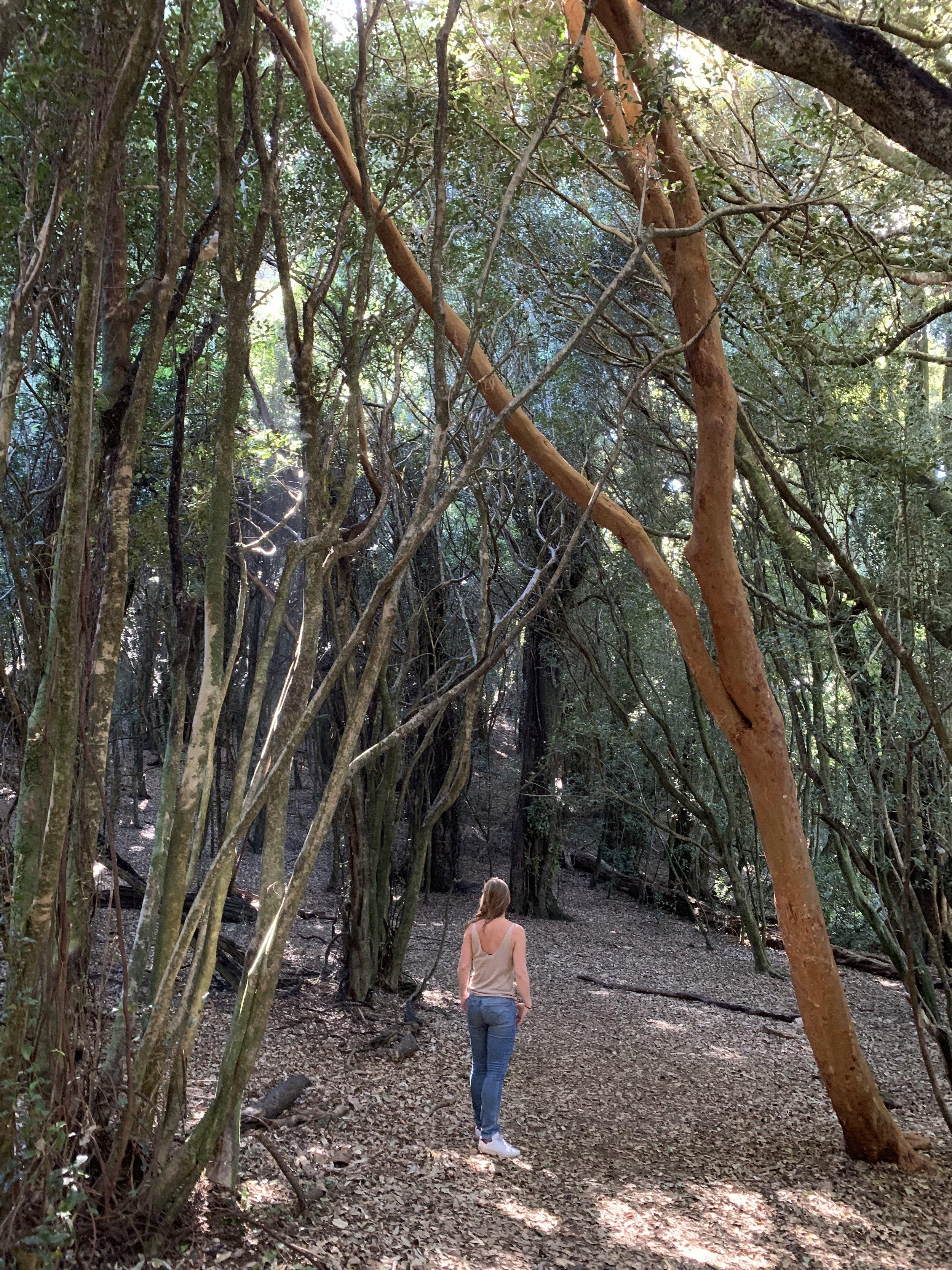 La reserva de Curiñanco
