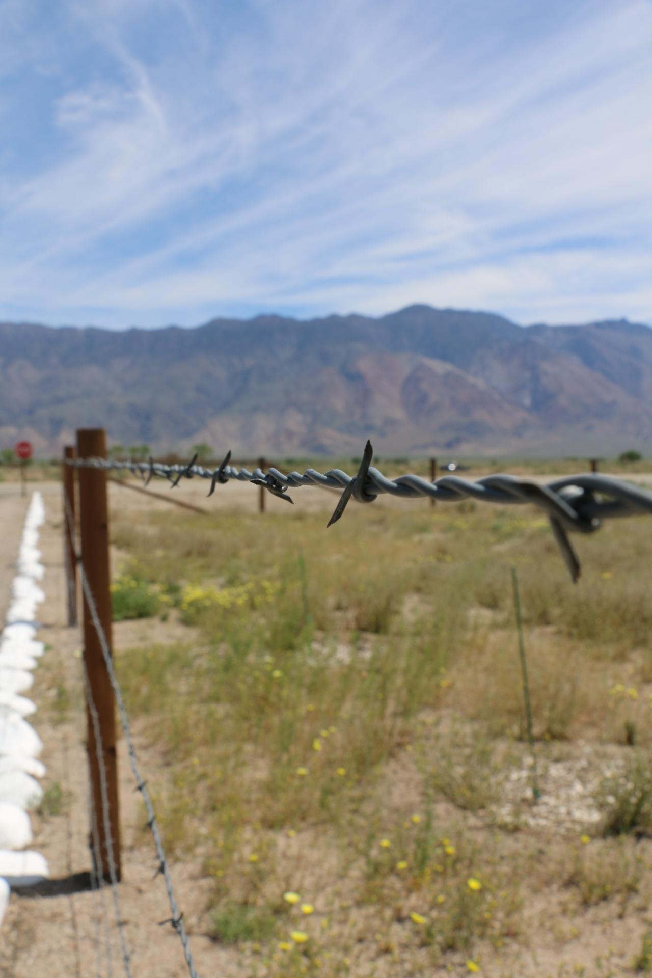 (Barbed wire fence outside of Manzanar, Photo Credit: Athena Mari Asklipiadis)