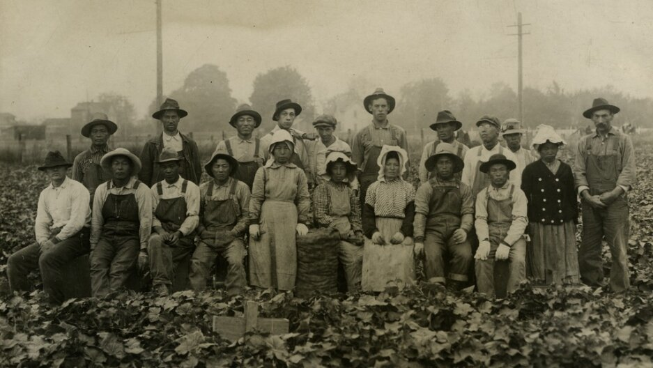 Japanese migrant strawberry pickers, possibly on Vashon Island, Washington, February 14, 1915.   Credit: Courtesy of the  Ouchi Family Collection