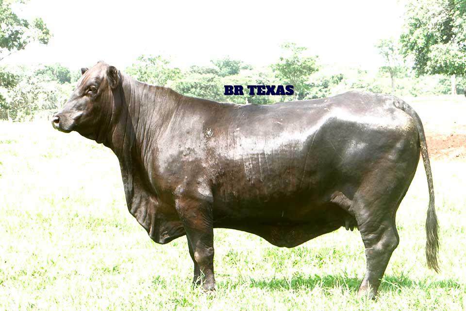 Br Texas S164 - Composição Racial: 3/8 Zebuína 5/8 TaurinaNº de Gerações: SegundaNascimento: 04/11/1995Tatuagem: S164Ver registro