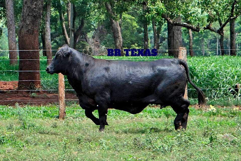 Br Texas H294 - Composição Racial: 3/8 Zebuína 5/8 TaurinaNº de Gerações: SegundaNascimento: 10/10/2005Tatuagem: H294Ver registro