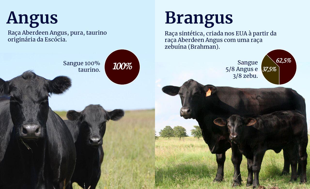 Fonte: Compre Rural.