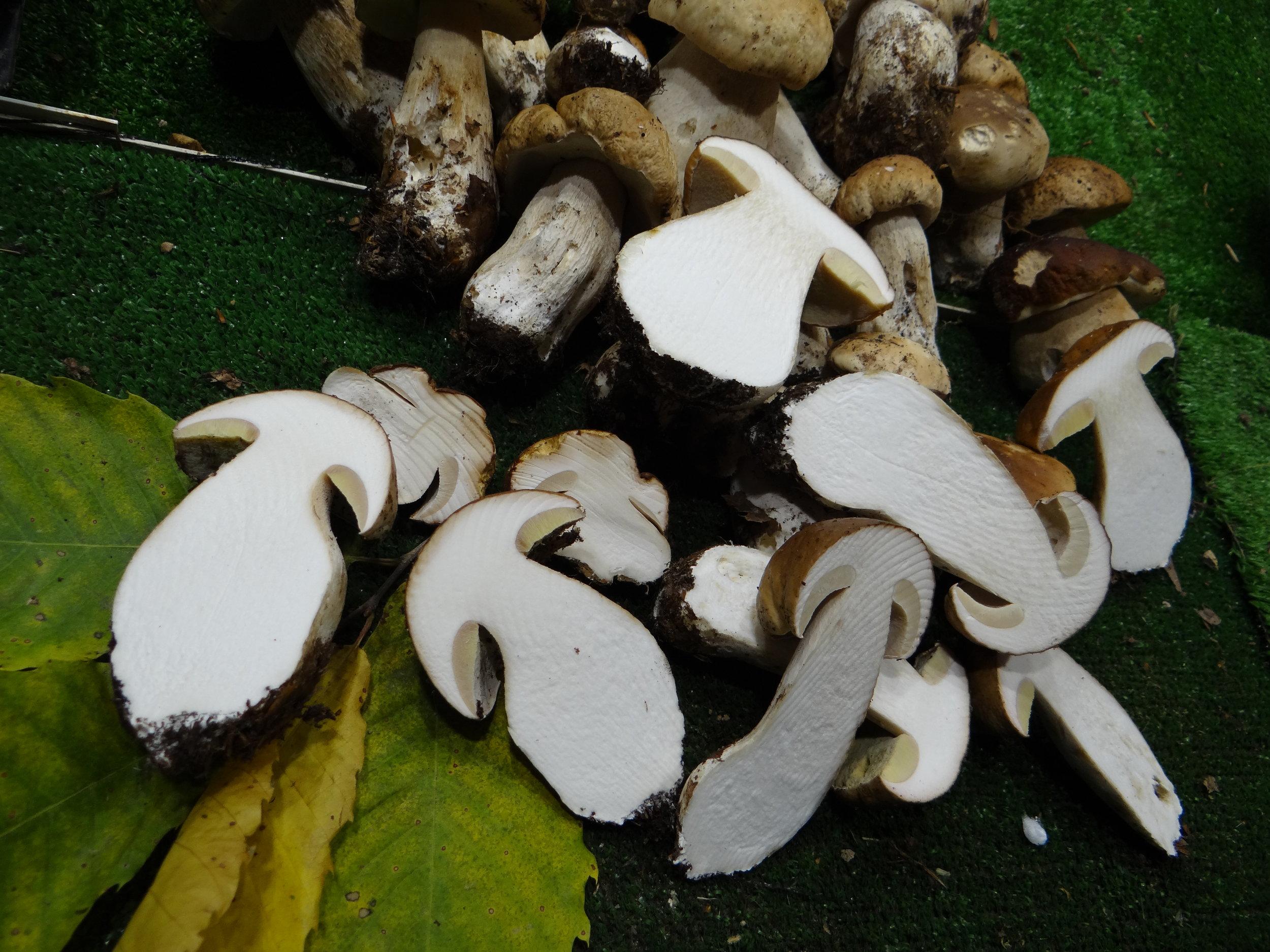genoa market funghi porcini.JPG