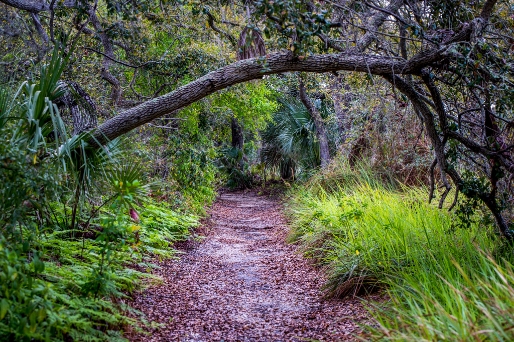 Nature Photo Walk - The Narrows | Largo, Florida