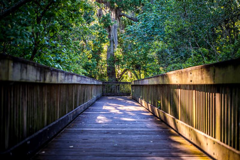 Nature Photo Walk - Sawgrass Lake Park | St Petersburg, Florida