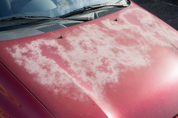 auto paint restoration houston tx.jpg