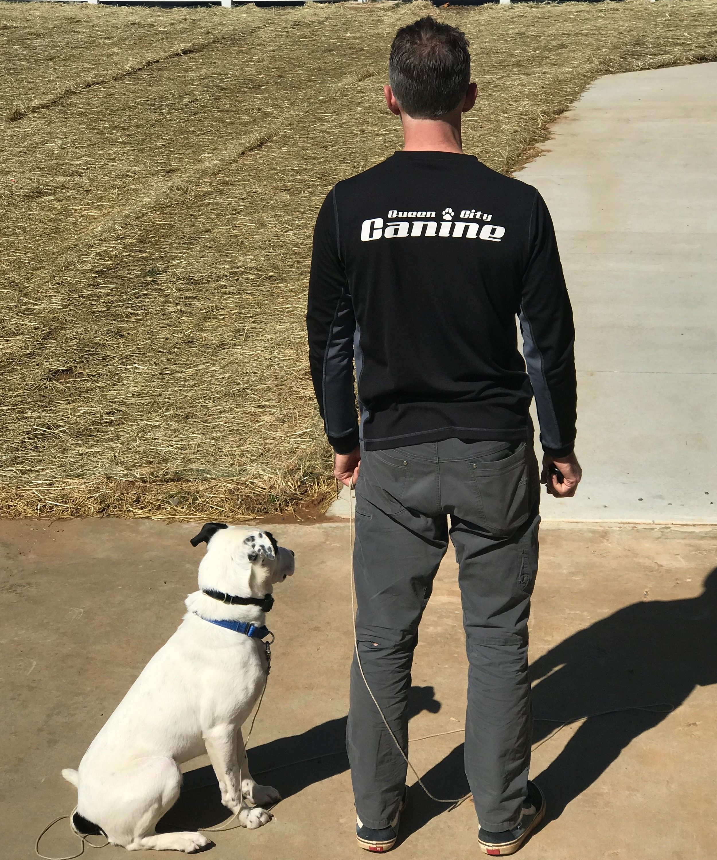 Queen City Canine's One-on-One training program is the best step towards a well behaved pet, and we guarantee it! -
