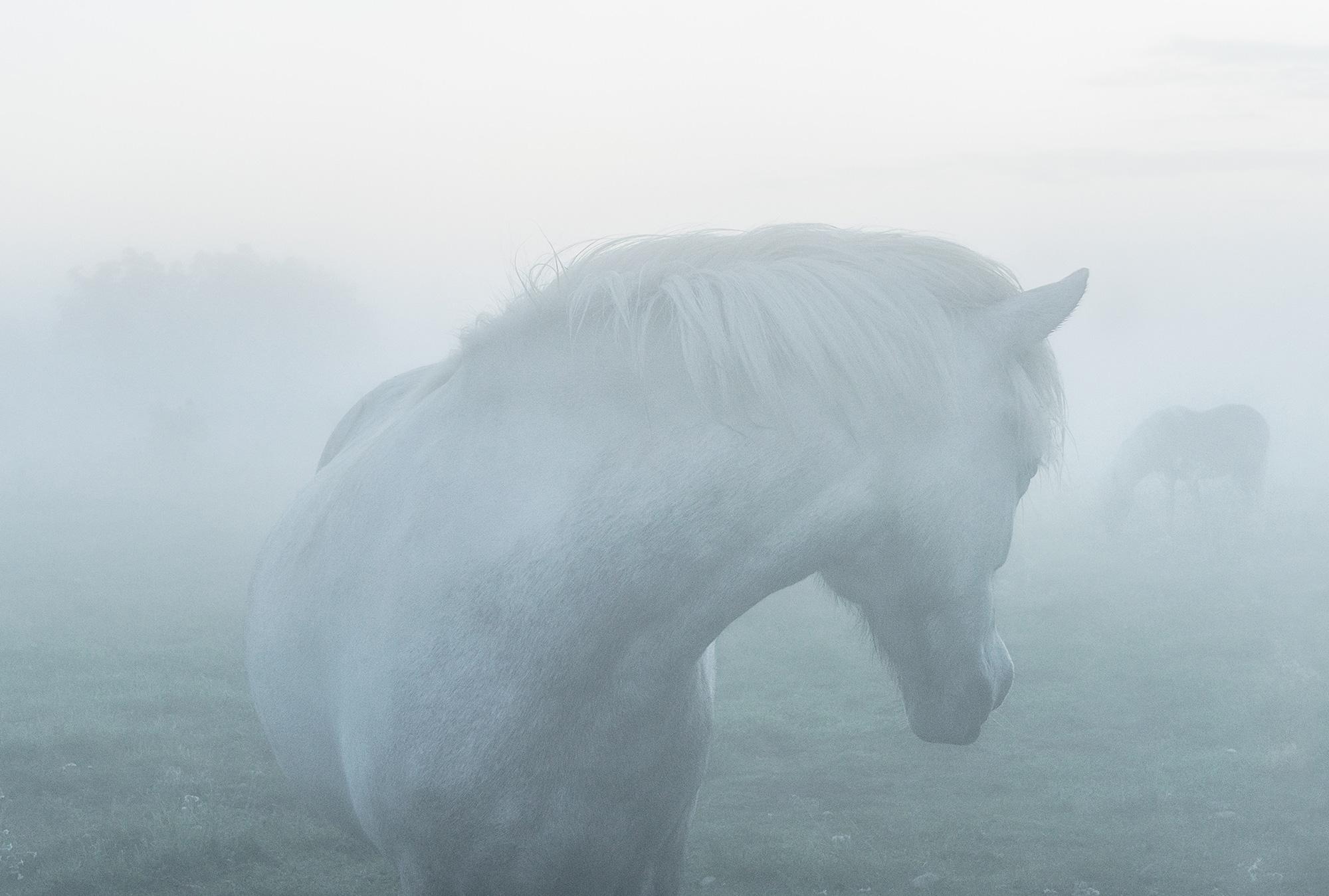 Horse in Lau 100 x 70 cm