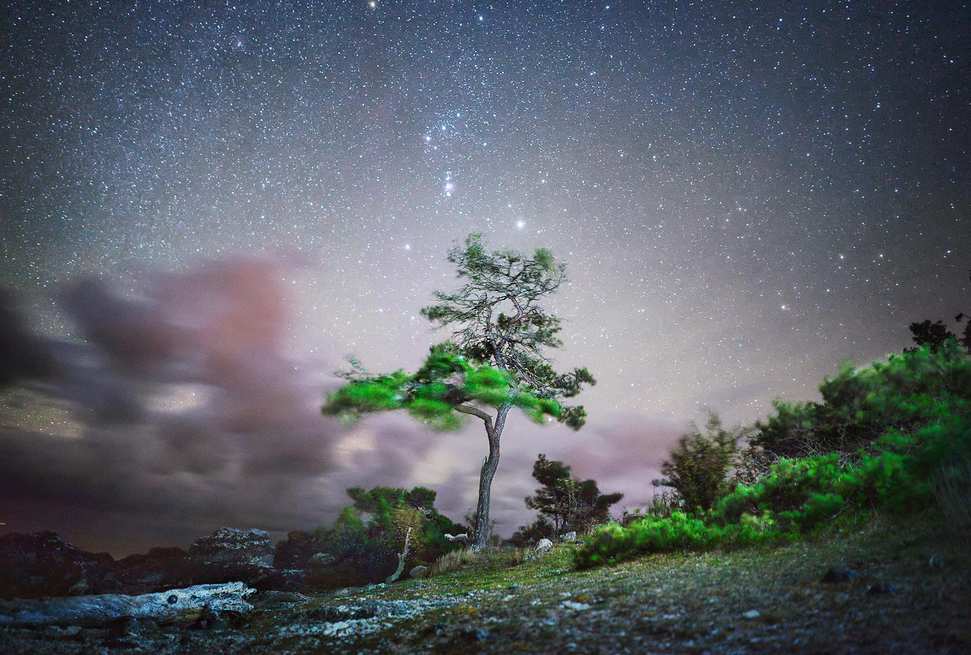 Tree at Folhammar 100 x 70 cm