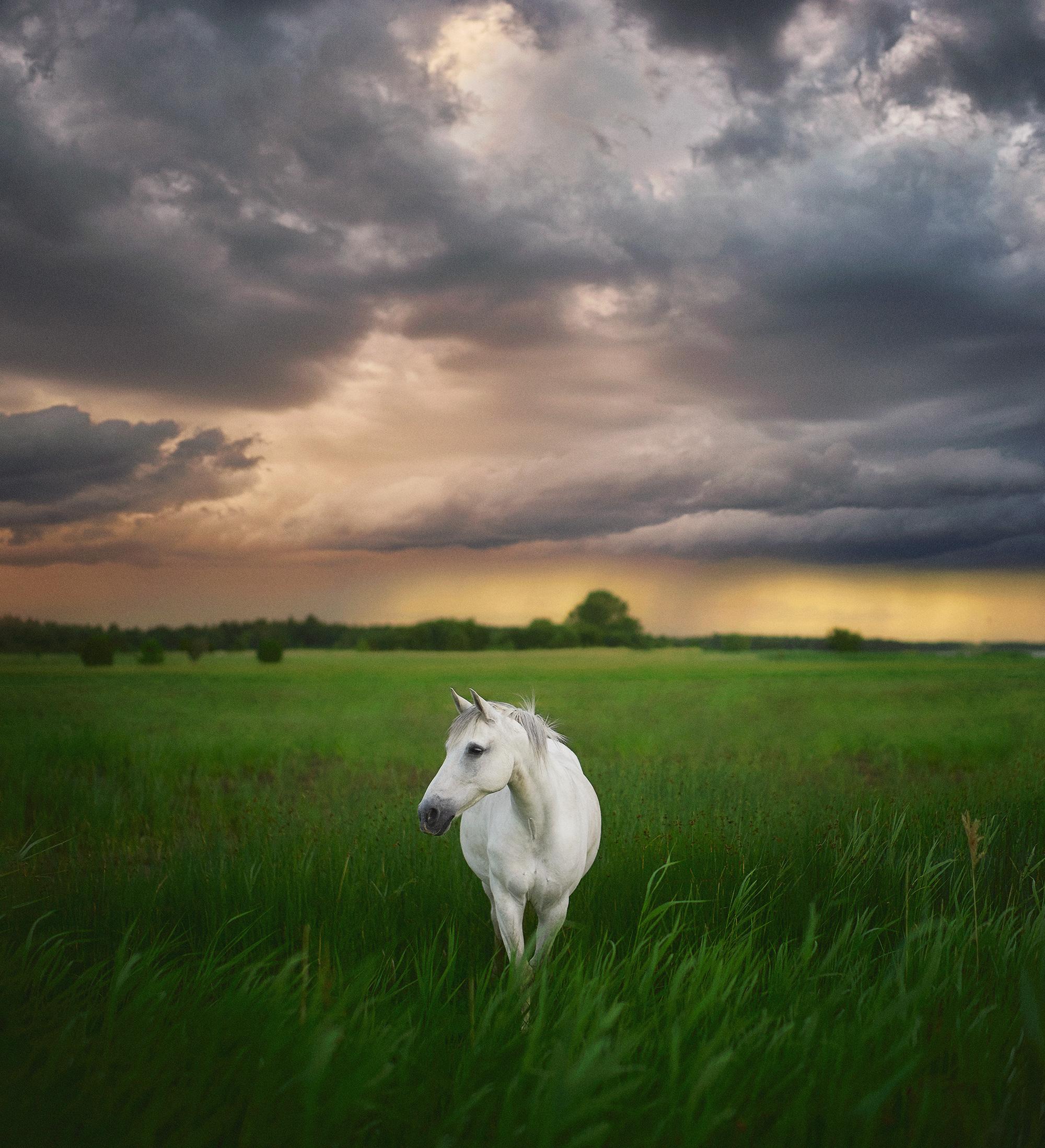 Häst i Lausviken 60 x 65,5 cm