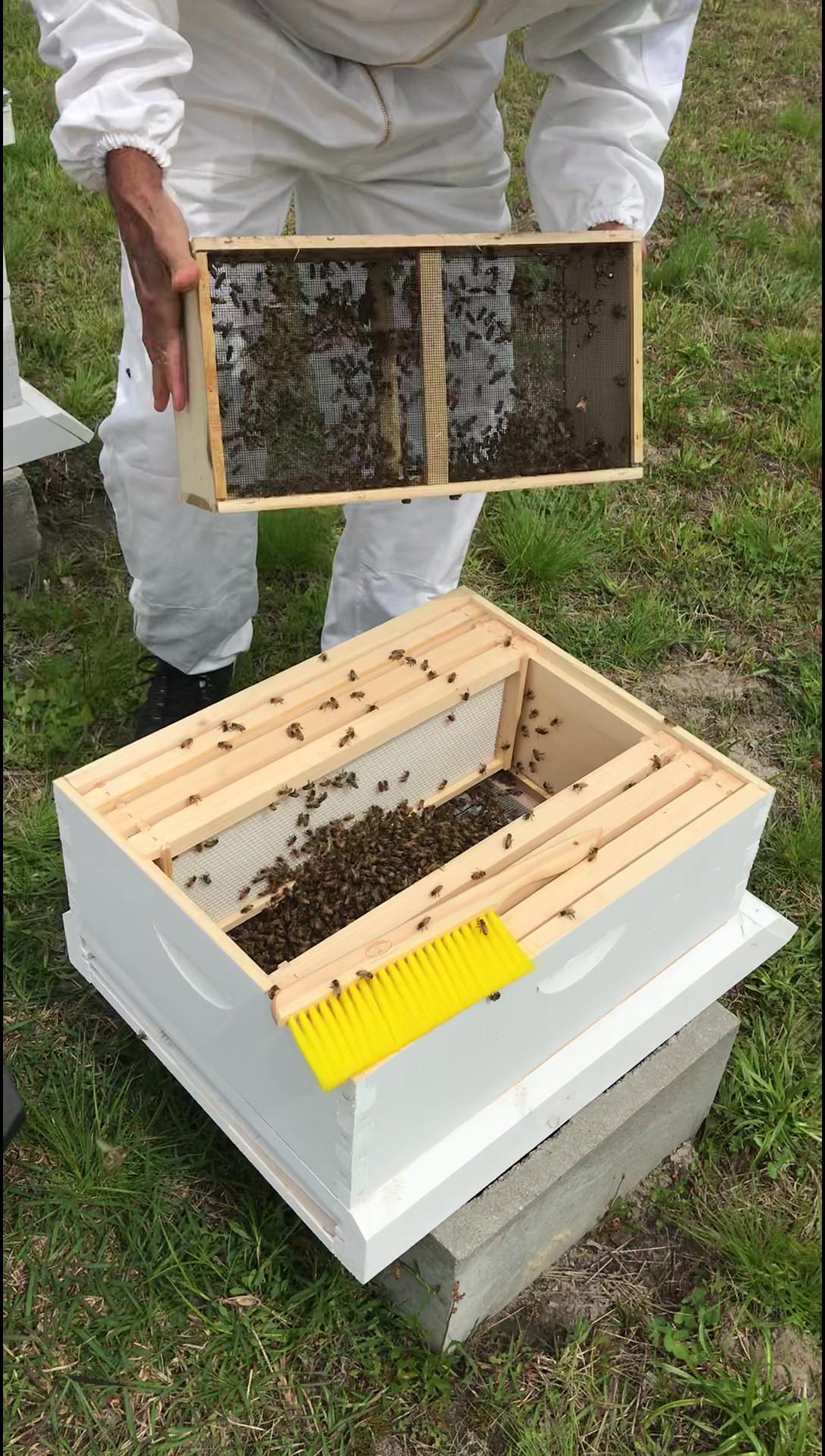honey bee installation- for honey bees on methods.jpg