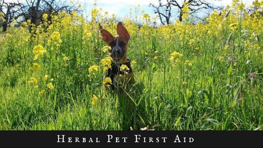 Herbal First Aid for Pets