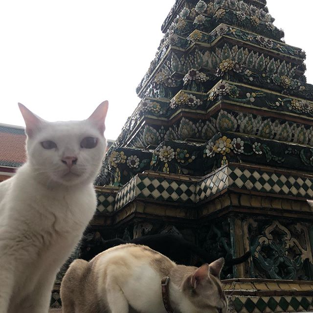 Cats of Wat Pho