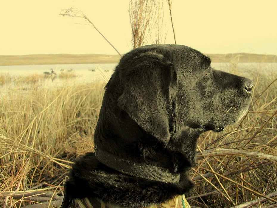 My ol Bizdog, Hunted with me 1994-2009