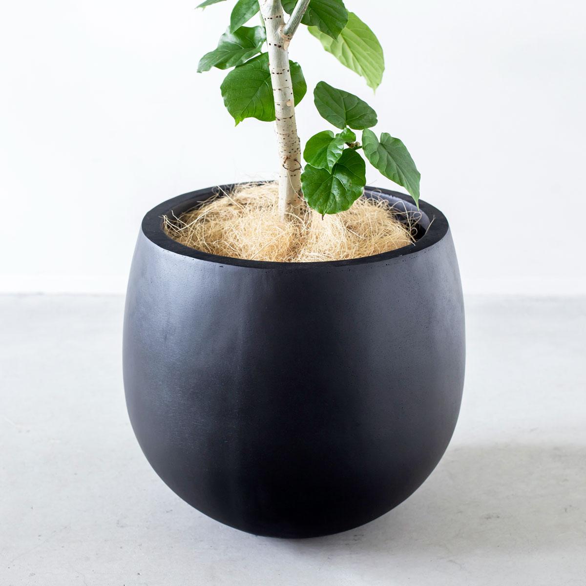ハイセンスなデザイン - 素敵な観葉植物にするためには、容れ物にもこだわらなければなりません。Botanismでは、植物だけでなく鉢もこだわって厳選。また、お祝い用のプレートもワンランク上のものを選び、洗練された印象を与えるようなグリーンギフトに仕上げています。受け取った人に喜ばれ、そしてずっと置いてもらえるプレゼントです。